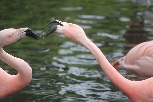Imagine de stoc gratuită din animal, colorat, detaliu, exotic