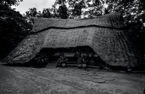 哈勒公園, 肯亞, 蒙巴薩 的 免費圖庫相片