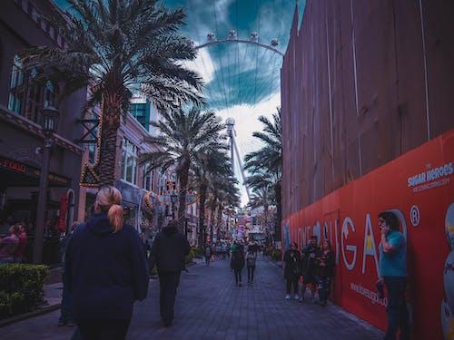 People Walking Near Palm Trees
