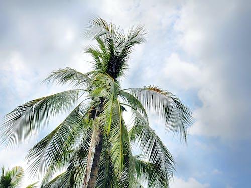 Foto profissional grátis de ao ar livre, árvore, atraente, azul