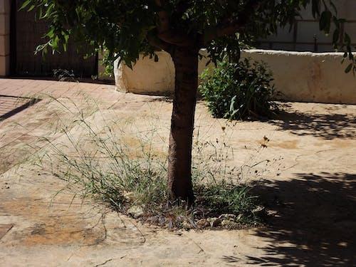 Free stock photo of blade of grass, bole, grass