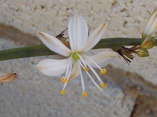 Free stock photo of flower, nature, petal
