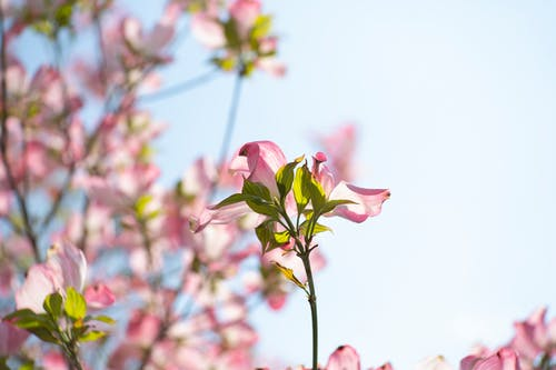 ağaç, bitki, bitki örtüsü, Çiçek açmak içeren Ücretsiz stok fotoğraf