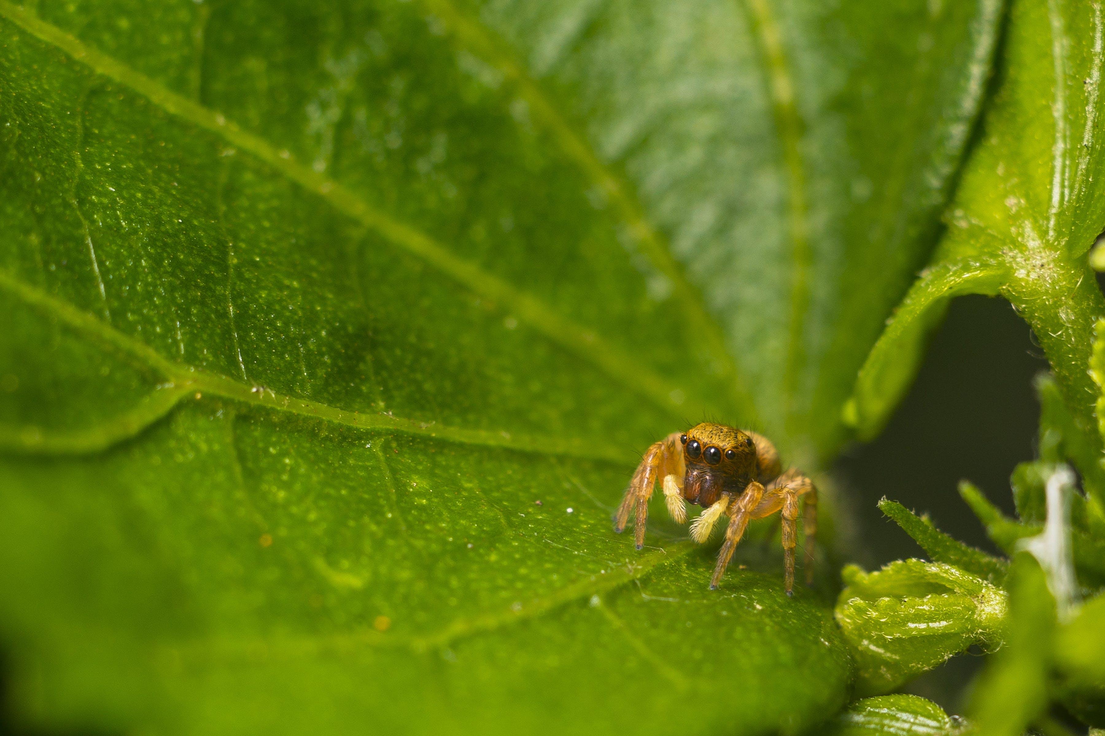 Macro Photo of Brown Spider on Leaf