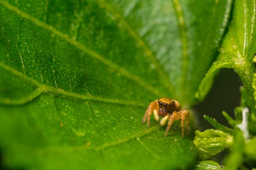 Macro Photo of Brown Spider on Leaf