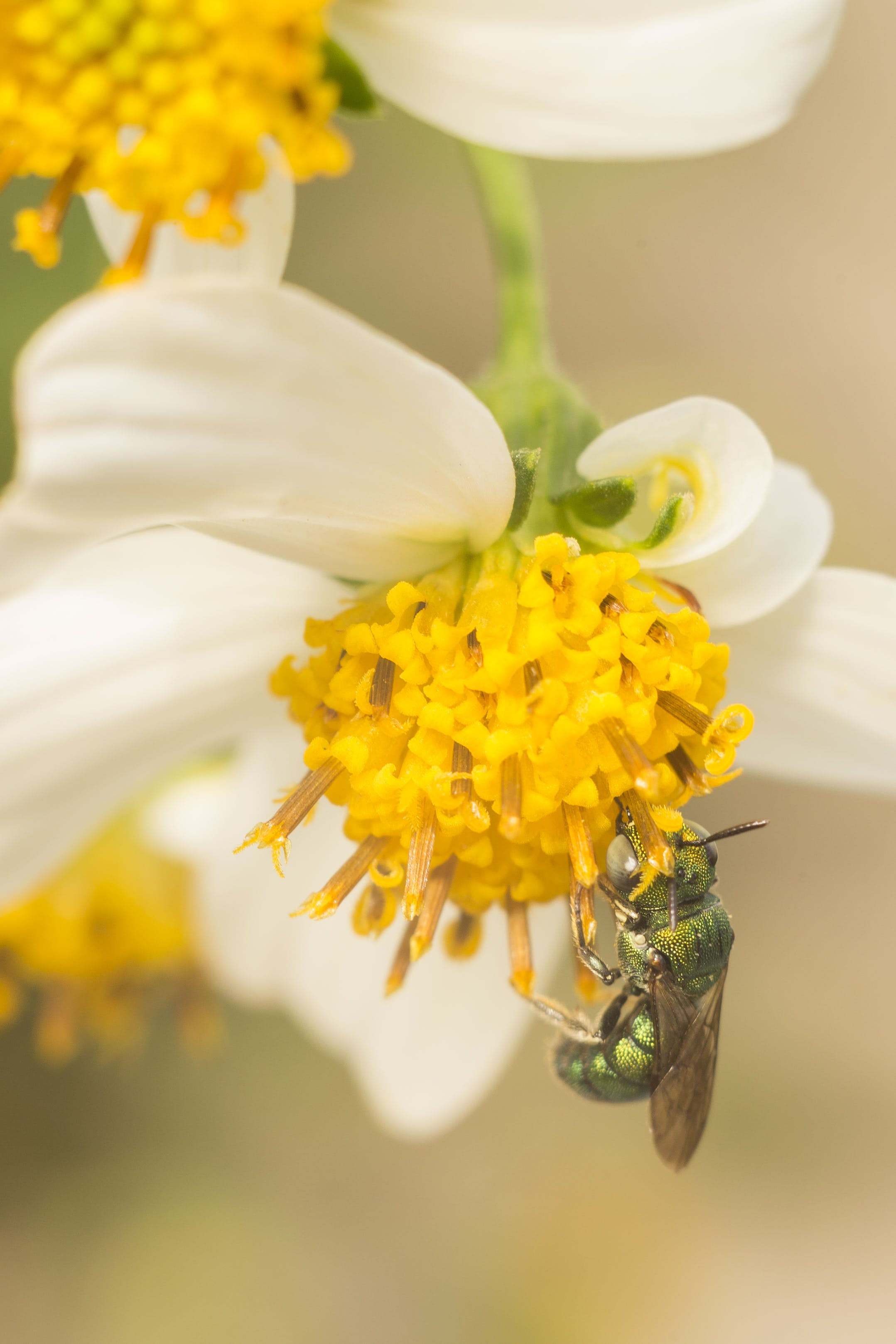 Free stock photo of bees, wasp