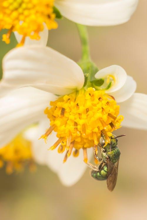 Бесплатное стоковое фото с оса, пчелы