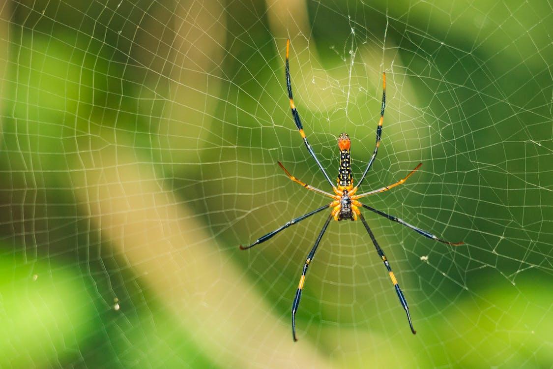 makro, pavoučí síť, pavouk