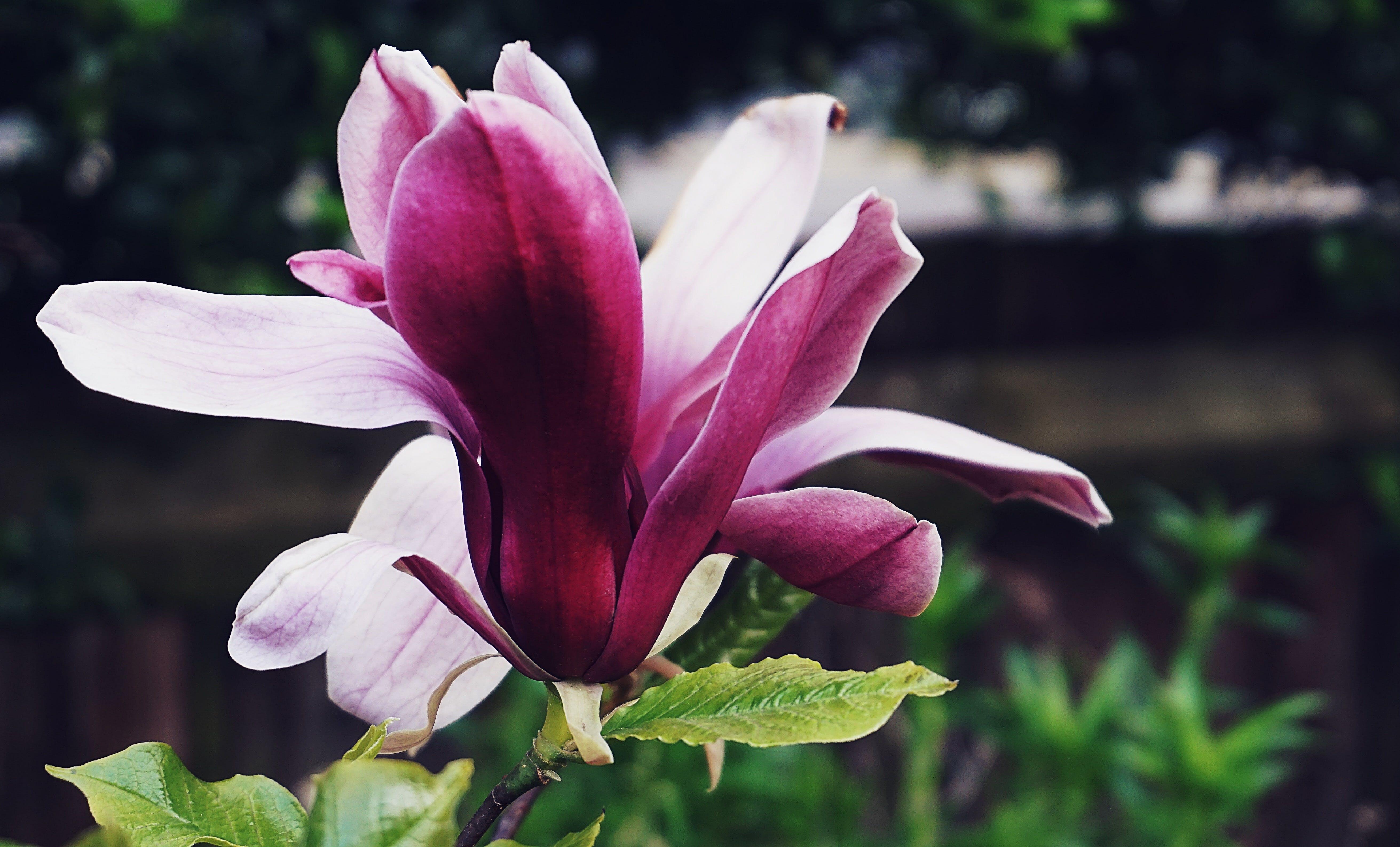 Gratis lagerfoto af blomst, blomster, have, kraftværker