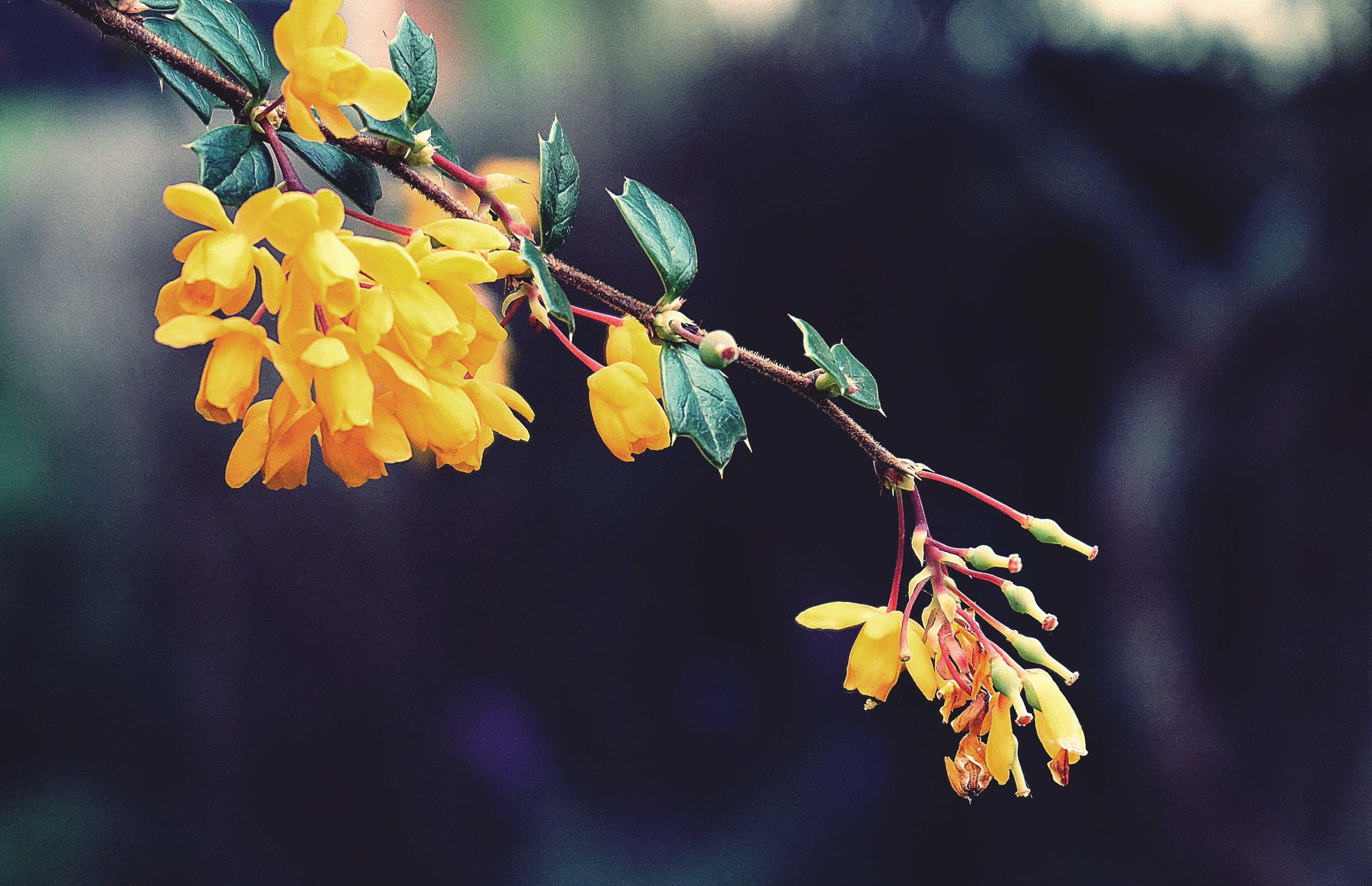 관목, 꽃, 꽃무늬, 노란 꽃의 무료 스톡 사진