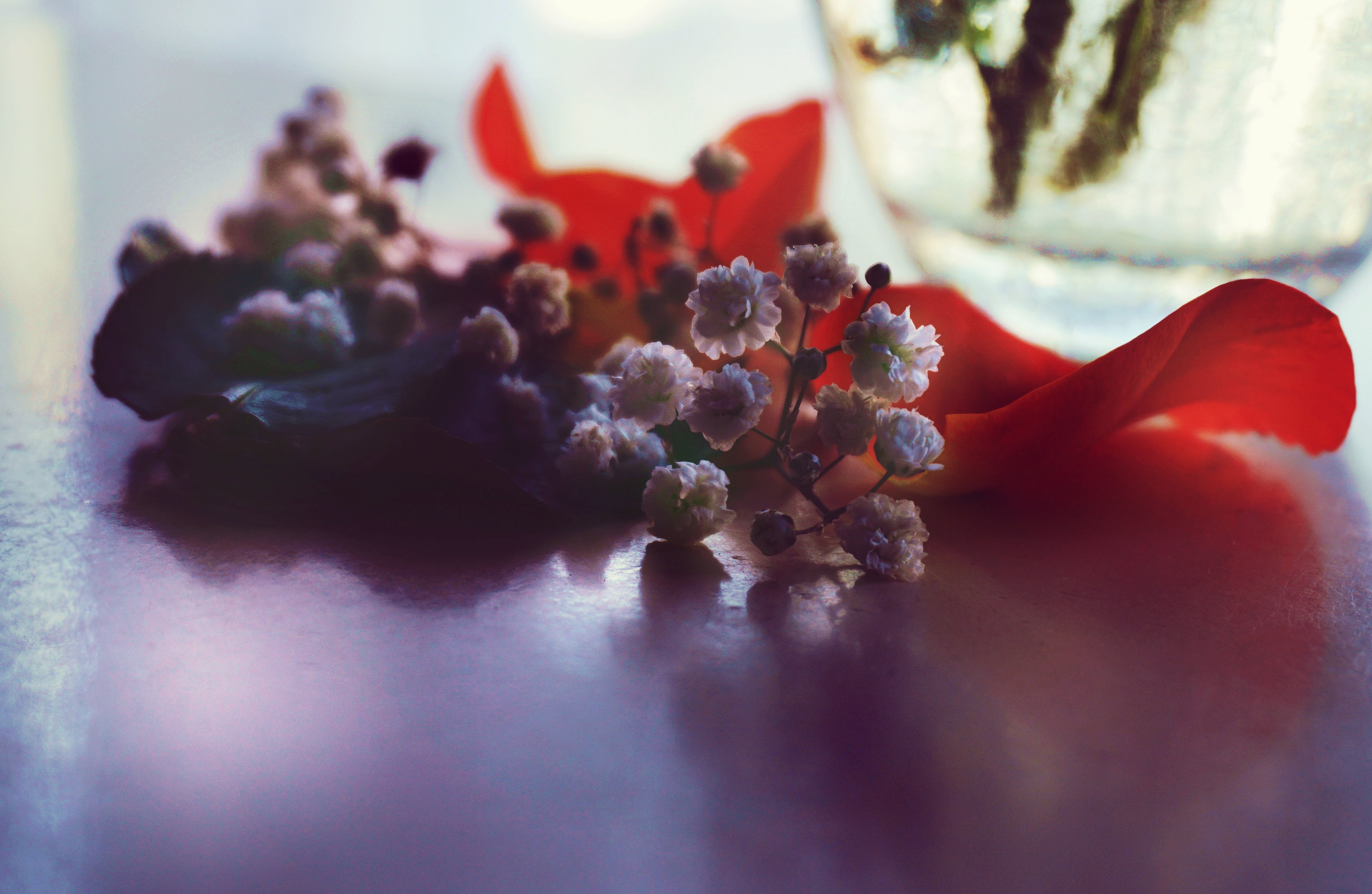 꽃, 꽃무늬, 꽃병, 꽃잎의 무료 스톡 사진