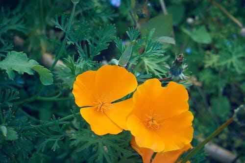 Free stock photo of fleurs, flore, jardin