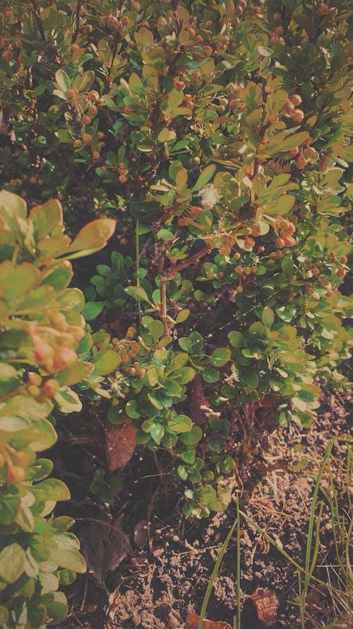 คลังภาพถ่ายฟรี ของ พฤกษา, พืชสีเขียว, ภาพพื้นหลัง, ฤดูร้อน