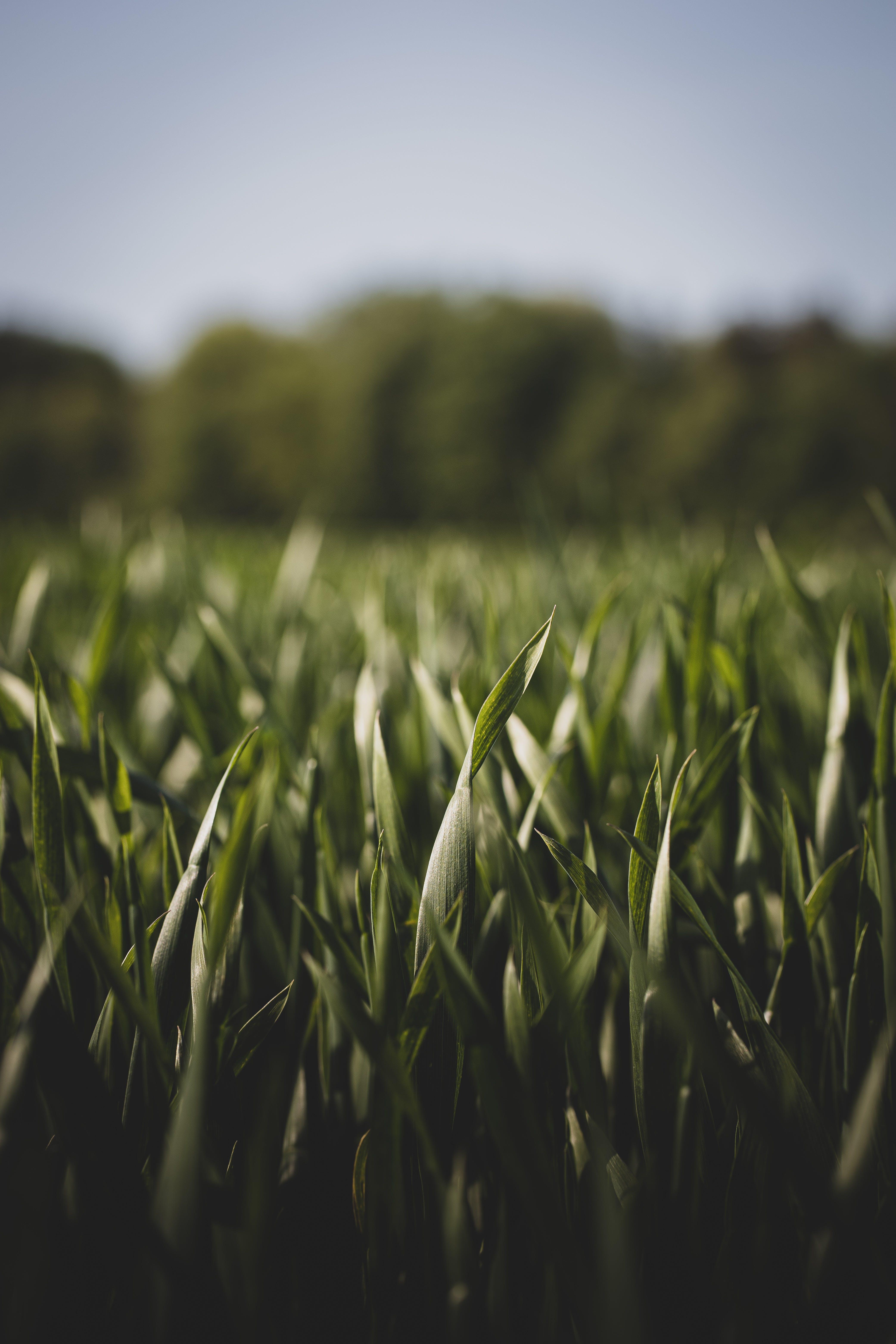 Základová fotografie zdarma na téma denní světlo, farma, flóra, hřiště
