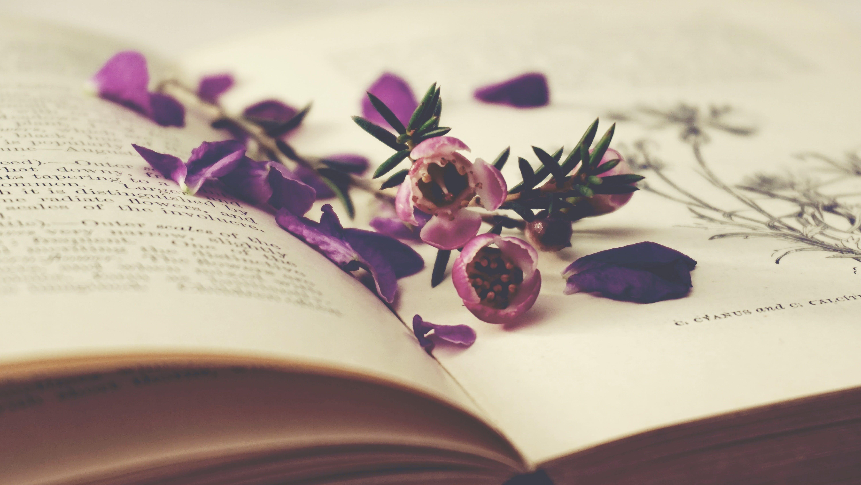 Gratis lagerfoto af åben bog, årgang, blomster, blomstermotiv
