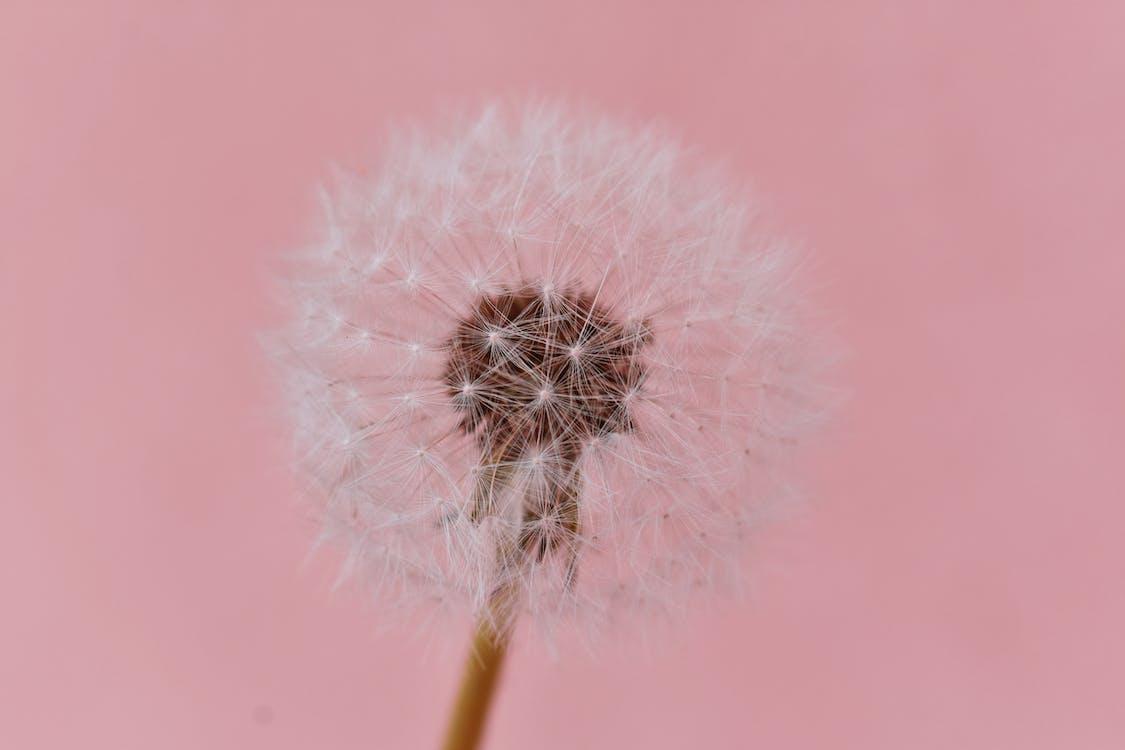 cap, delicat, floare