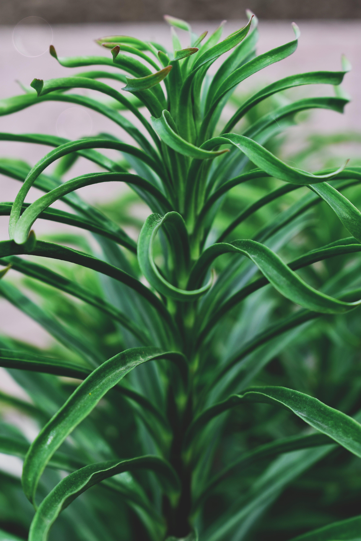 Ảnh lưu trữ miễn phí về hệ thực vật, không thích, lá, màu xanh lá