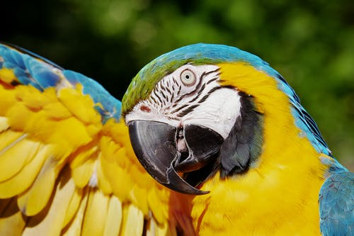 Close-up Photo of a Yellow and Blue Macaw
