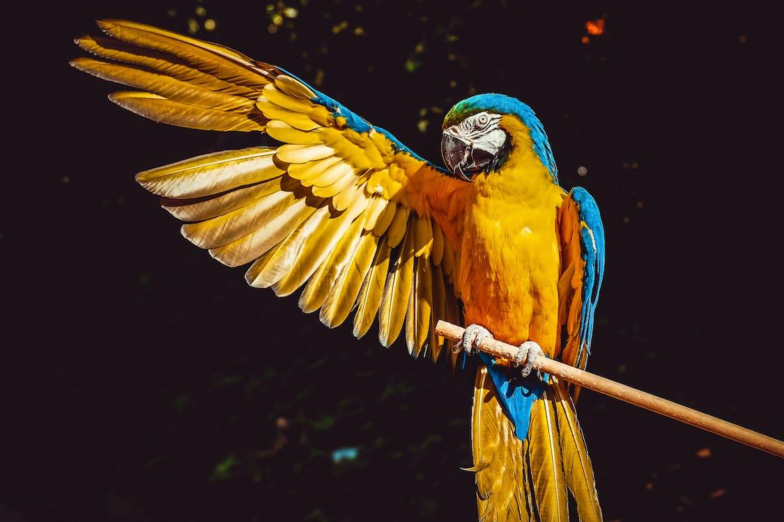 Foto profissional grátis de animais selvagens, animal, arara