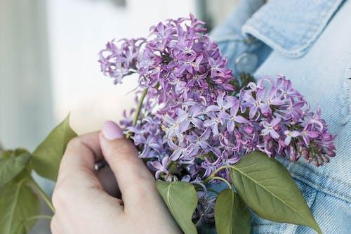 Gratis arkivbilde med blad, blomst, bukett, farge