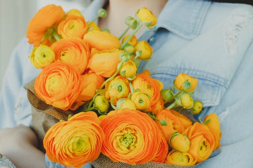 Yellow And Orange Flowers