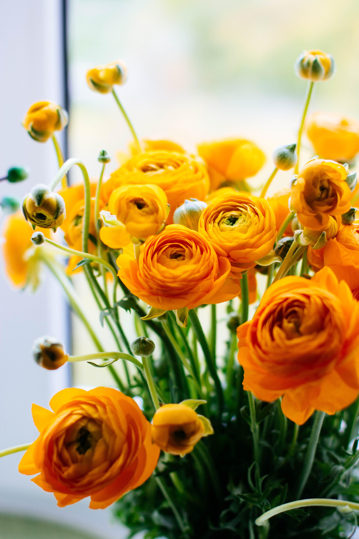 Gratis lagerfoto af avne, bane, blad, blomst
