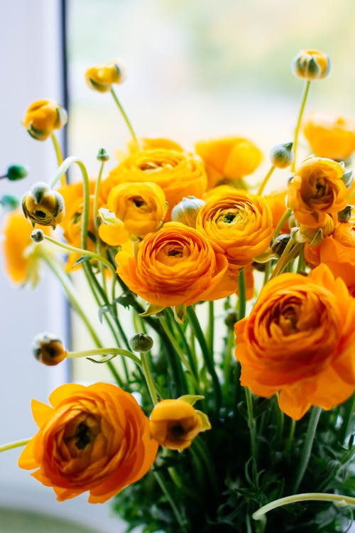 Yellow-Orange Flowers In Bloom