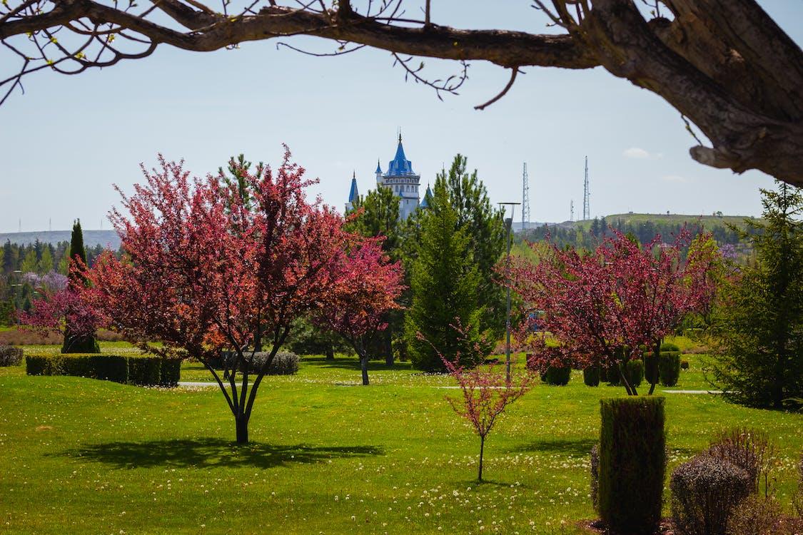 ピンク, 宮殿, 春