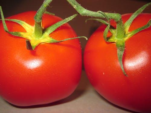 Photos gratuites de tomates
