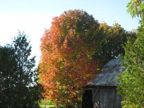 Photos gratuites de arbre, automne, campagne, grange