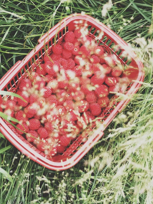 Fotos de stock gratuitas de frutas del bosques, rasberry
