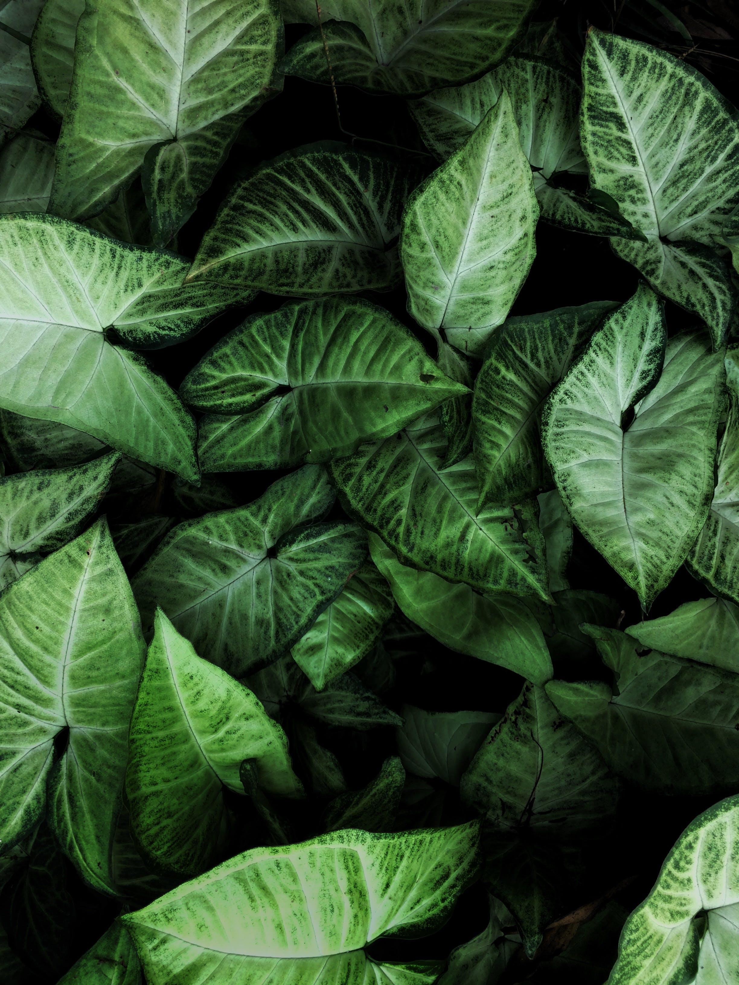 Kostenloses Stock Foto zu biologie, blätter, botanisch, farbe