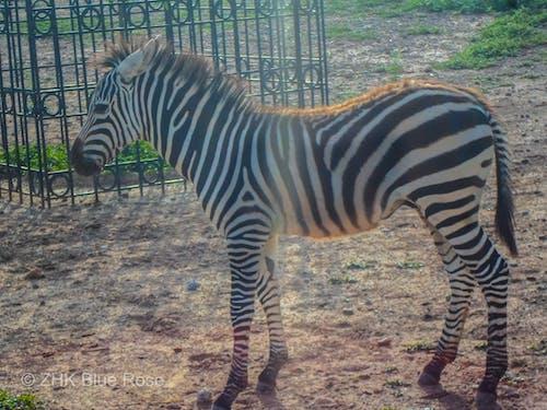 Foto d'estoc gratuïta de animal, animals, bonic, islamabad