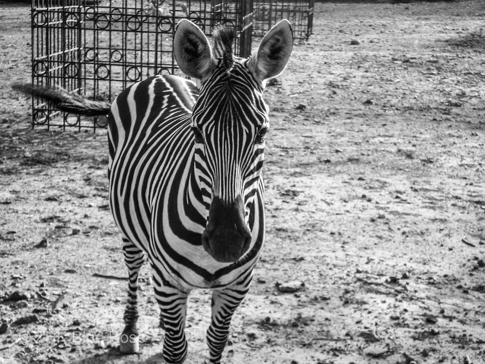 dyr, islamabad, islamabad zoo