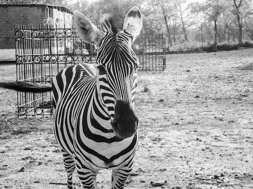 Foto d'estoc gratuïta de animal, animals, islamabad, Pakistan