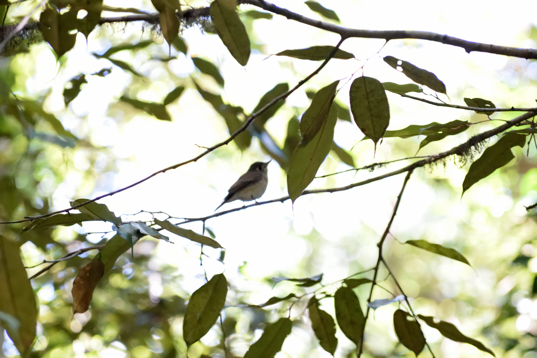Gratis lagerfoto af fugl, grøn, lanka, sinharaja