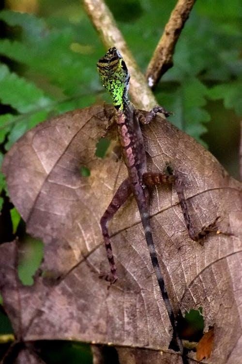 斯里兰卡, 斯里蘭卡, 棕色, 森林 的 免费素材照片