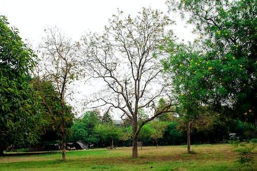 Ảnh lưu trữ miễn phí về #thiên nhiên, cây óc chó, cây trống, công viên tự nhiên