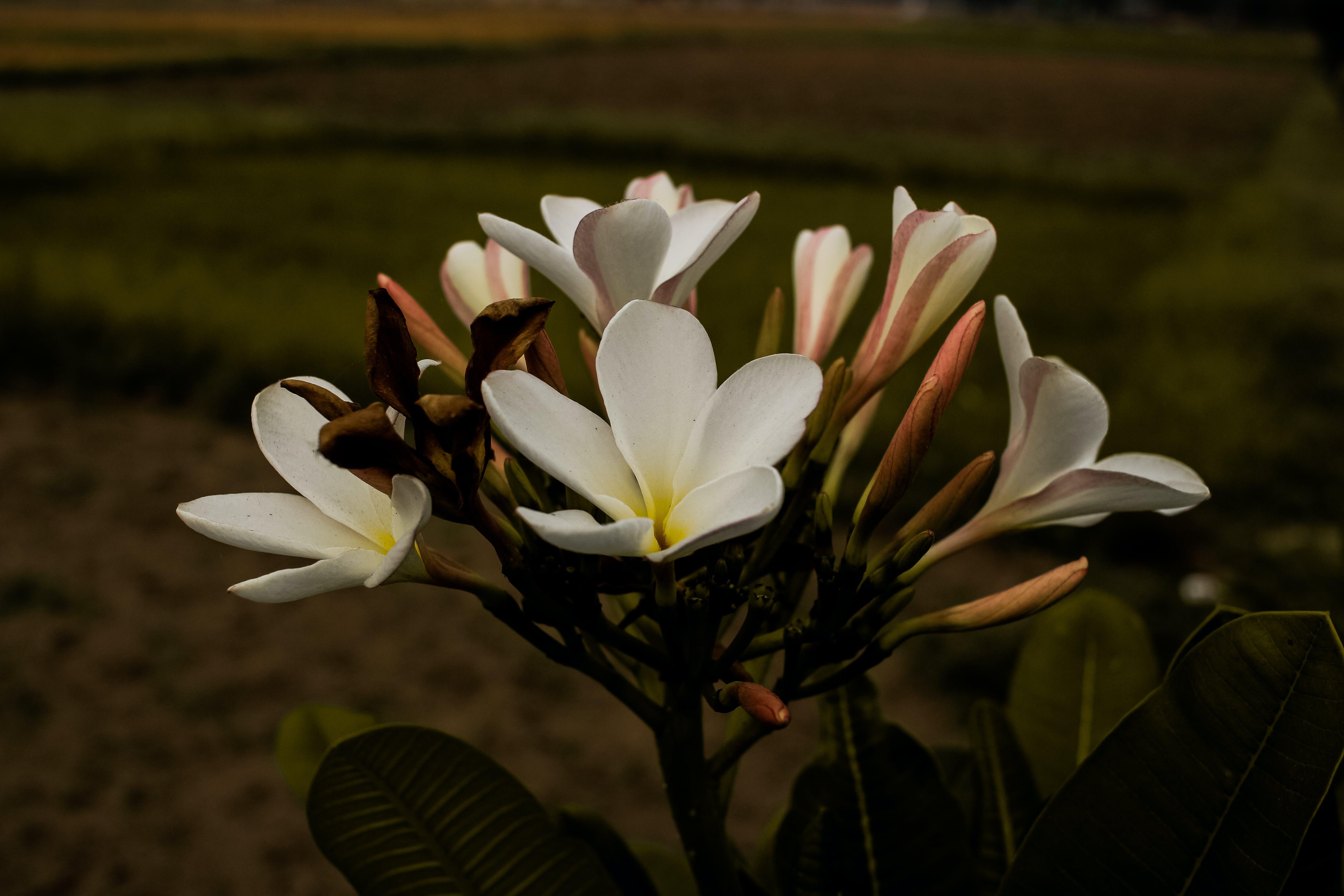 Základová fotografie zdarma na téma #příroda, 4k tapeta, bílá, krása v přírodě