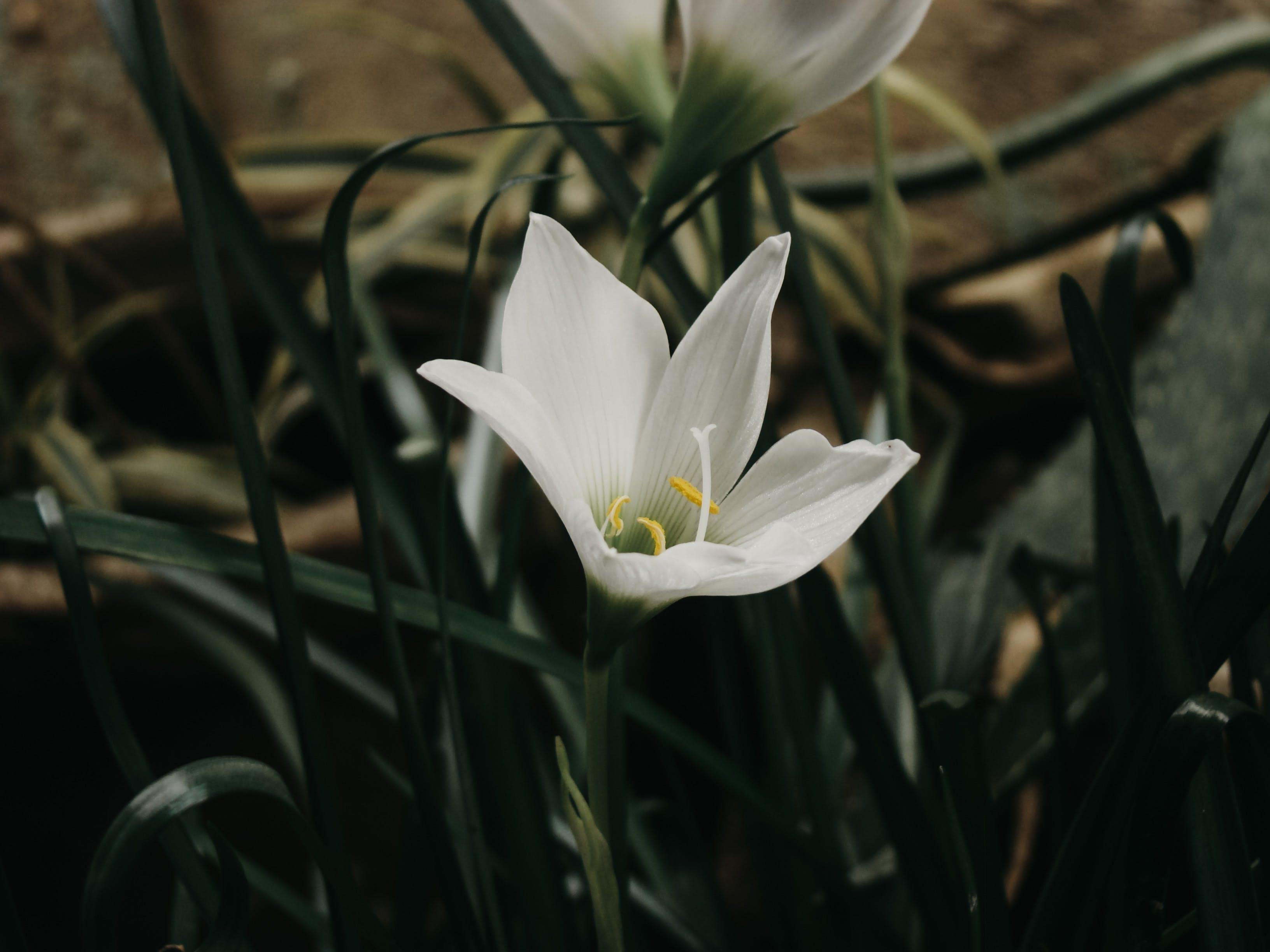 Foto d'estoc gratuïta de blanc, flor, flor bonica, fons