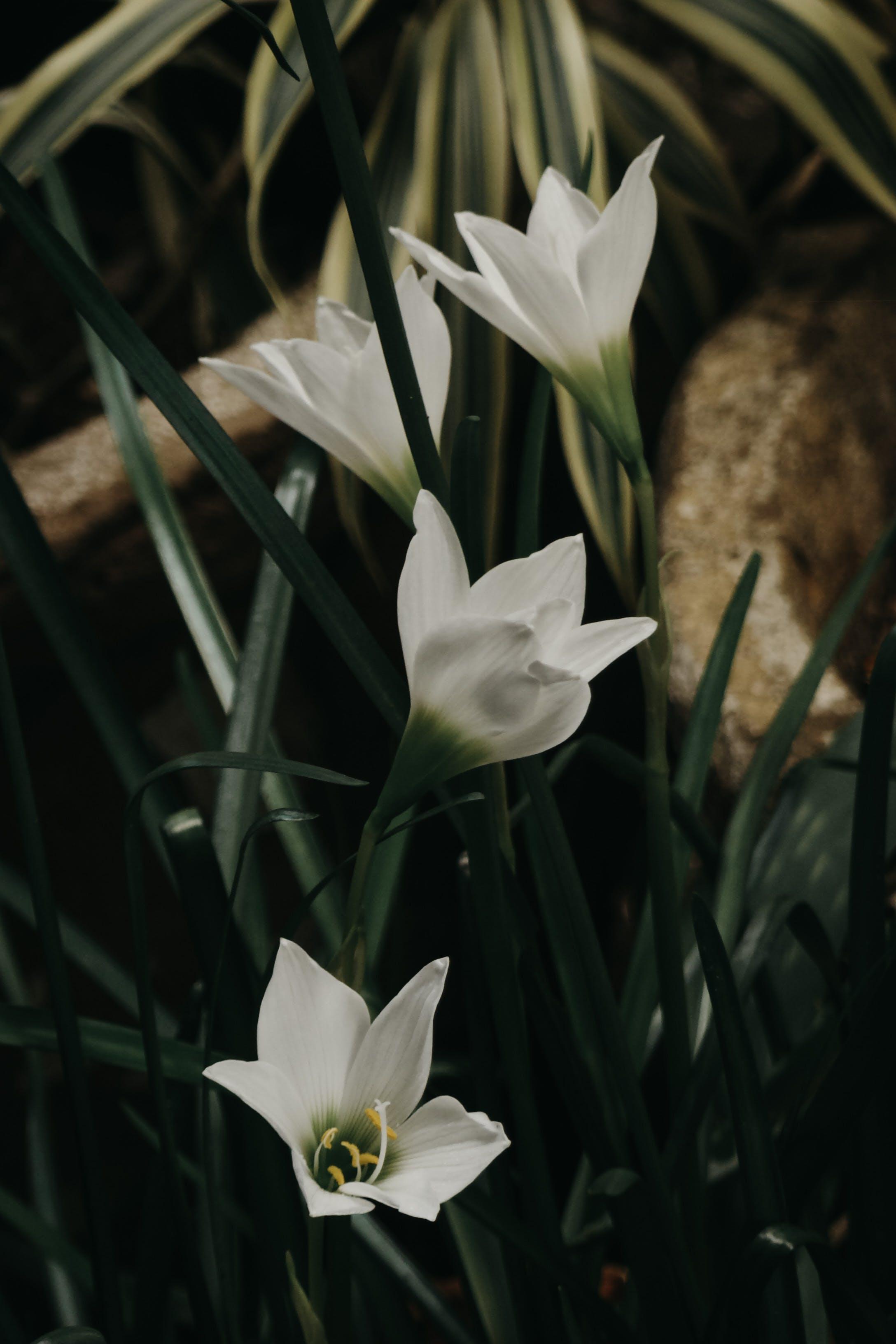 Foto d'estoc gratuïta de flor bonica, flors, flors boniques, fosc