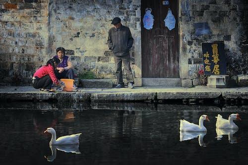 中國, 亞洲, 人, 女性 的 免费素材照片