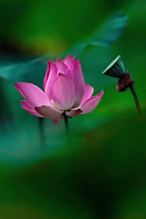 佛, 和平的, 天性, 植物群 的 免费素材照片