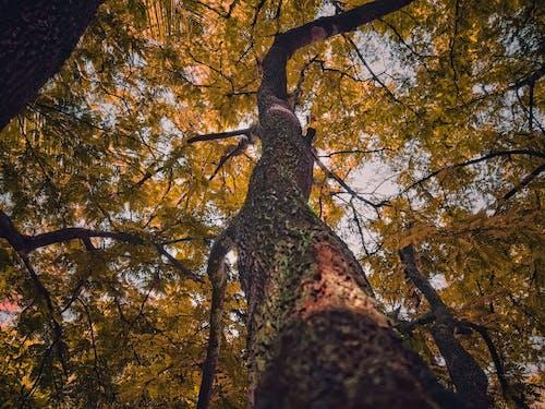 Безкоштовне стокове фото на тему «kerala, апельсин, гілки, дерево»