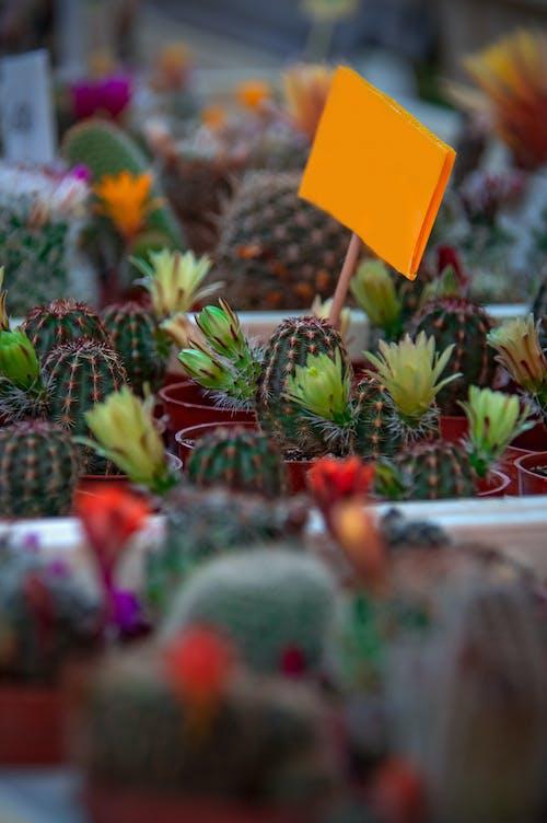 arka fon, Bahçe, bitki, bitkibilim içeren Ücretsiz stok fotoğraf