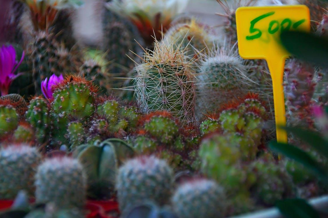 botanika, botanikus, dekoráció