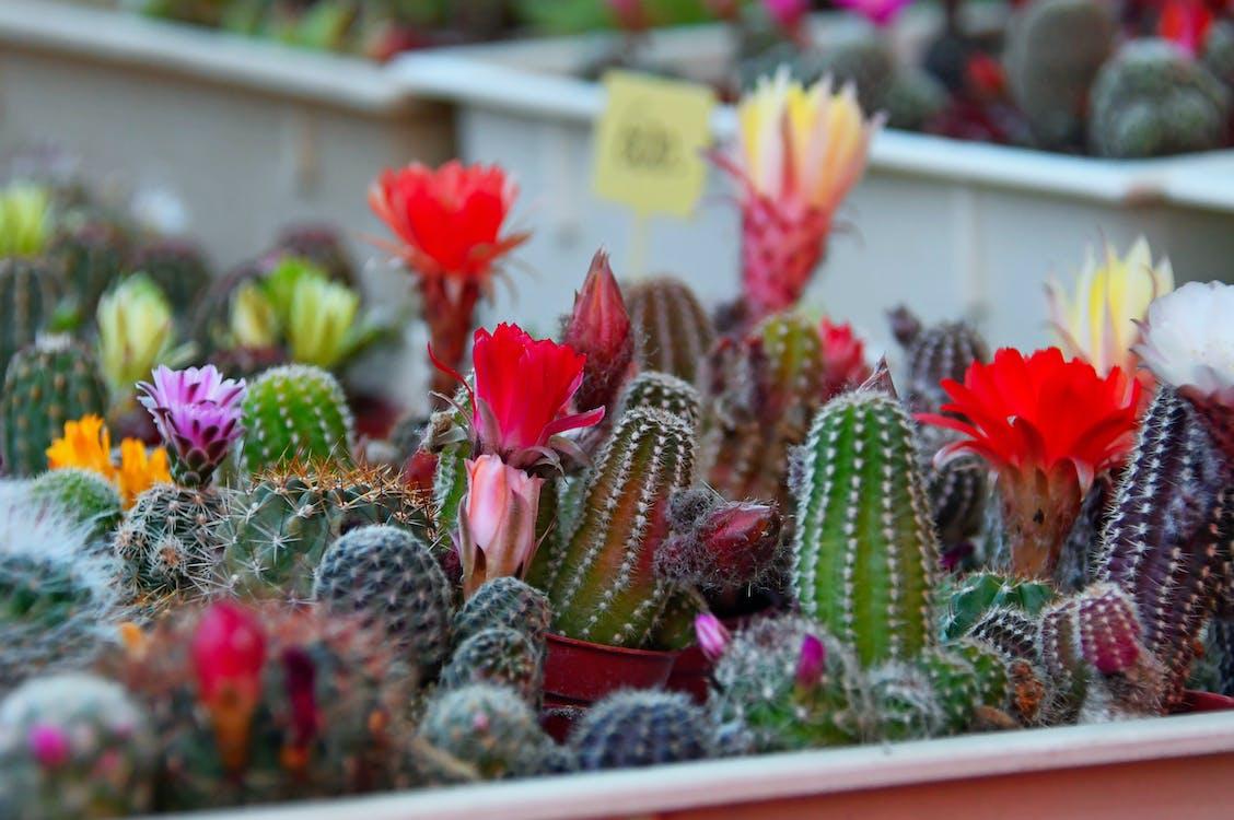 arrière-plan, botanique, cactus