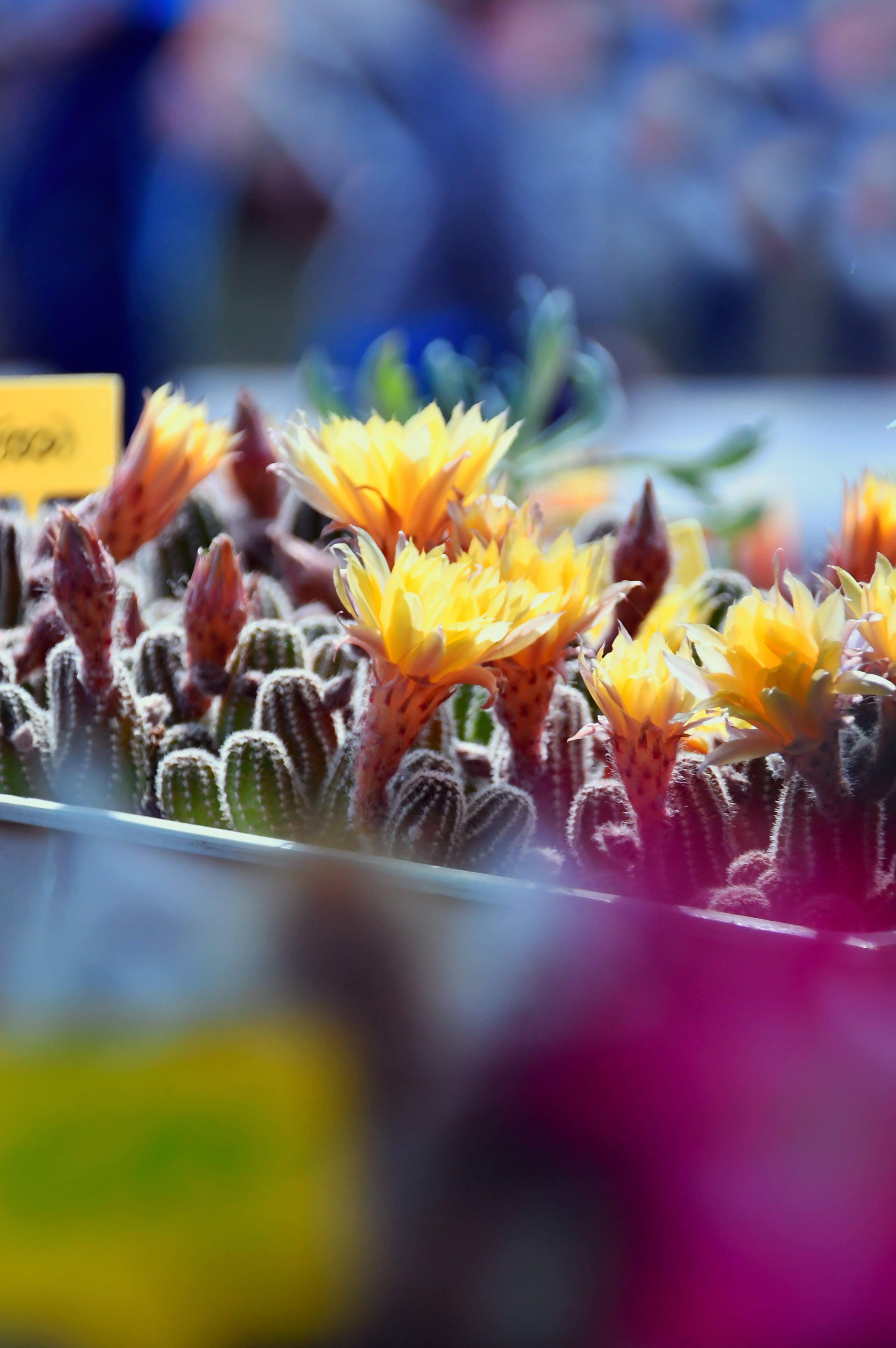 Ingyenes stockfotó botanika, botanikus, dekoráció, gyár témában