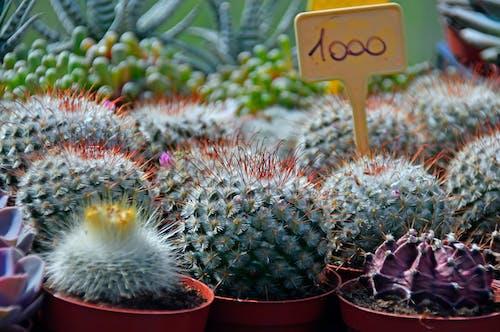 Безкоштовне стокове фото на тему «ботаніка, ботанічний, візерунок, великий план»