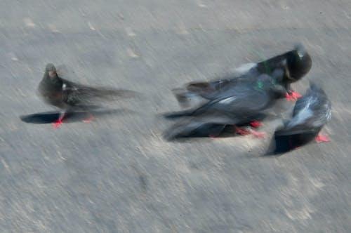 Foto d'estoc gratuïta de ala, animal, au, bec